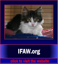 IFAW4