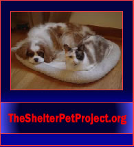 TheShelterPetProject