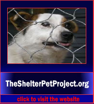 TheShelterPetProject2