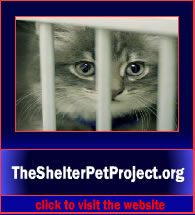 TheShelterPetProject3