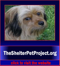 TheShelterPetProject4