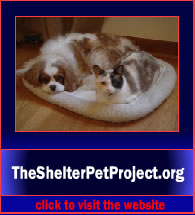 TheShelterPetProject5