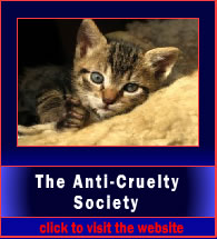 antiCrueltySociety5
