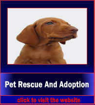 patRescueAndAdoption2