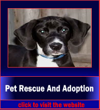 patRescueAndAdoption3