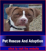 patRescueAndAdoption4