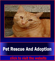 patRescueAndAdoption5