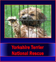 yorkshireTerrierNationalResource