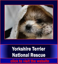 yorkshireTerrierNationalResource2