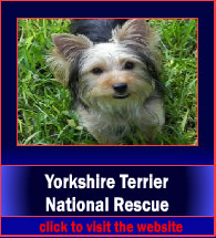 yorkshireTerrierNationalResource3