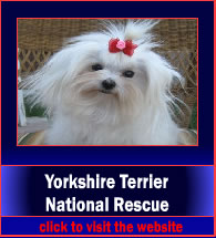 yorkshireTerrierNationalResource4