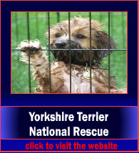 yorkshireTerrierNationalResource5